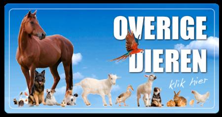 Overige dieren en producten